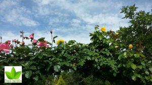 Chamartin Madrid mantenimiento de jardines