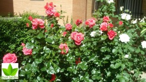 Arturo Soria Madrid servicios de jardineria