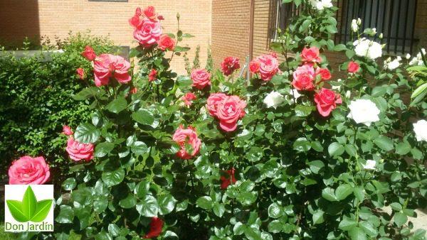 Labores de Jardín en el Mes de Junio