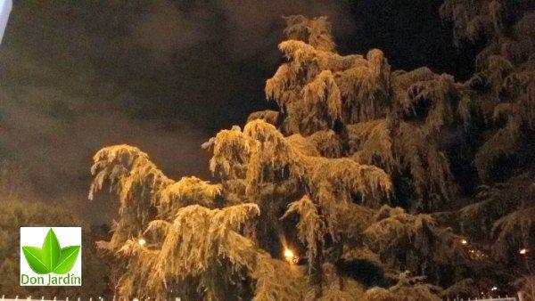 En Moratalaz de noche foto arbol