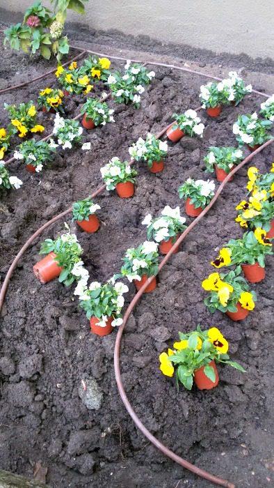 Plantar las plantas don jardin