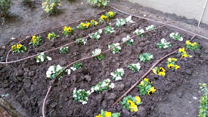 Plantar las plantas y poner el riego