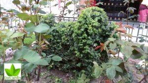 Jardin en Hortaleza