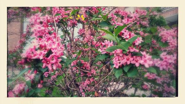 Labores de jardín en el mes de Mayo