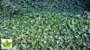 Efecto de golpe de calor jardín madrid