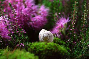 servicio de jardineria en madrid